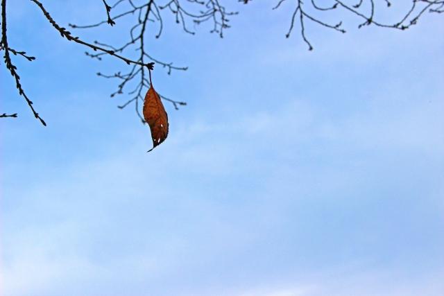 落ちそうな葉